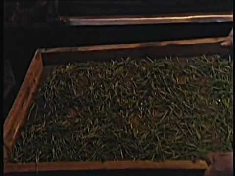 How We Make Teaposy® Blooming Tea