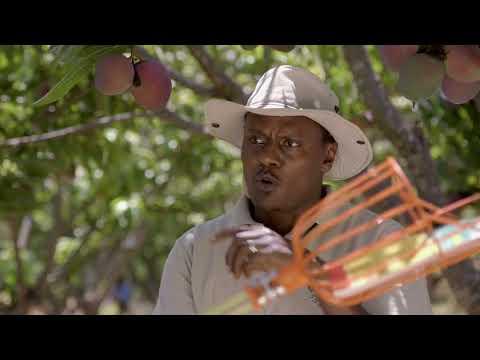 Shamba Shape Up Sn 08 - Ep 08 Mangoes, Oranges, Home Biogas (Swahili)