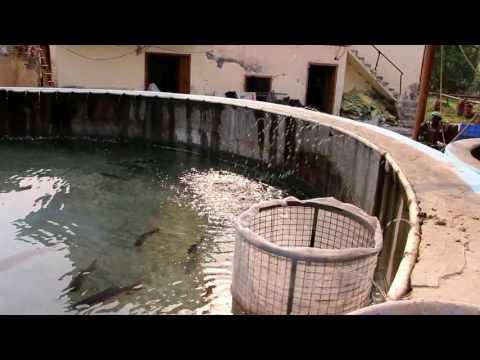 Fish Hatchery in India