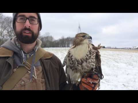 The Story of our Red-Tail Hawk Season (2016)