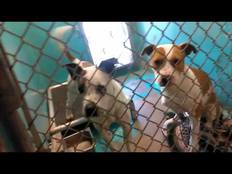 Some Humane Society of Southern Arizona 1-28-18 Adoptable Doggies