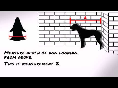 Measuring a dog