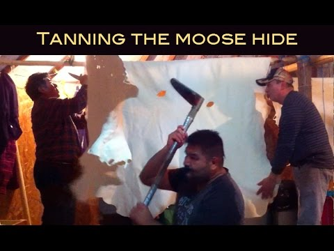 TANNING THE MOOSE HIDE - WITH CREE ELDERS
