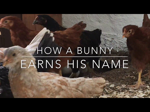 Weekend Farmgirl: Lockwood's Ranch - How A Bunny Earns His Name