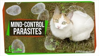 How Mind-Controlling Parasites Teach Us About Brains