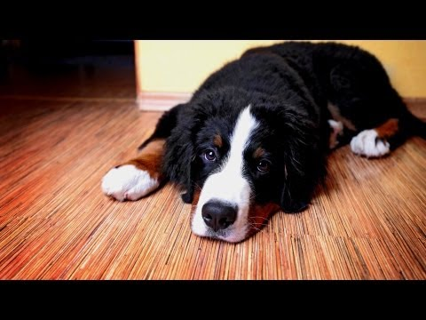 How to House-Train Your Puppy | Puppy Care