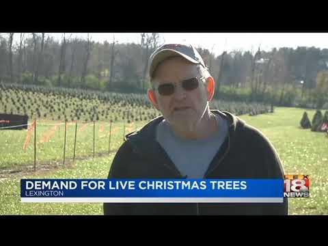 Demand For Live Christmas Trees