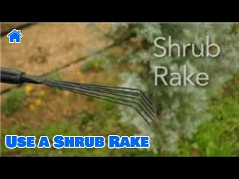 Garden Tool Guides : How to Use a Shrub Rake