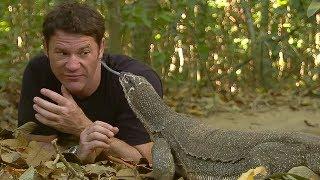 Monitor Lizard Licks Steve