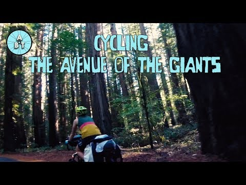 Cycling through the Avenue Of The Giants | Adventure Bike Touring