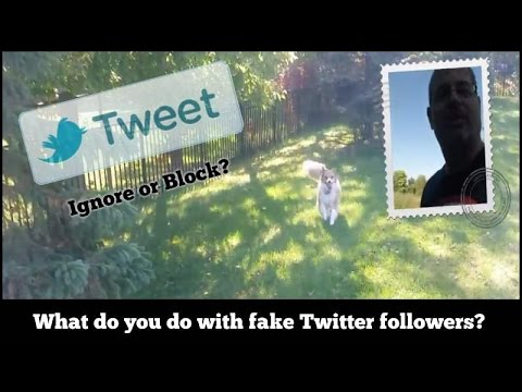 What do you do with fake Twitter followers?