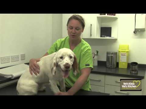 Basic dog health check