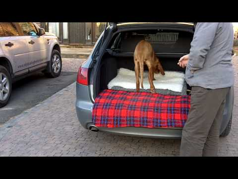 How to introduce a dog to car travel
