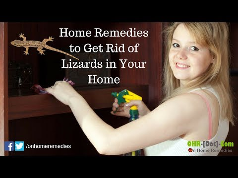 Home Remedies to Get Rid of Lizards in Your Home