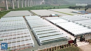 Sci-tech aids China's poverty alleviation