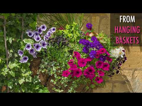 Using the Power of Flowers in Your Garden
