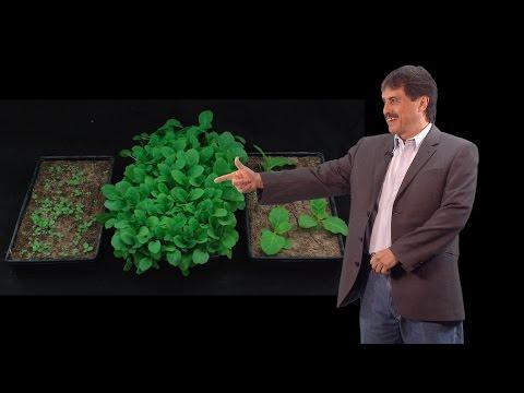 Luis Herrera-Estrella (Langebio) Part 3: An environmentally friendly phosphorus fertilization system