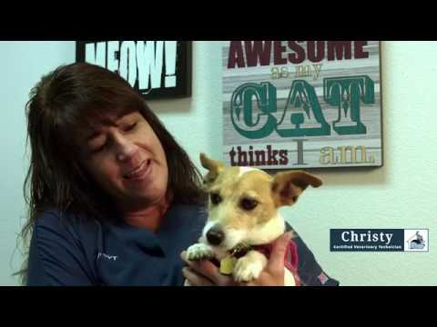 Christy - Certified Veterinary Technician