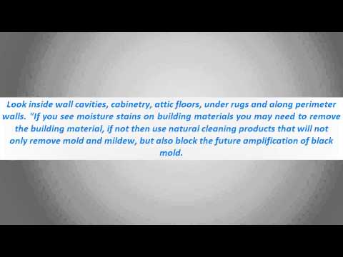 How To Remove Mold - Housekeeping Tips : How To Remove Mold From Leather