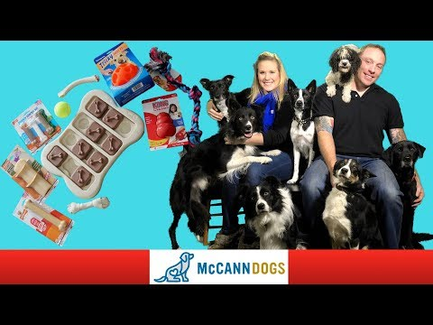 Toys For Dogs- Here's What You NEED To Know