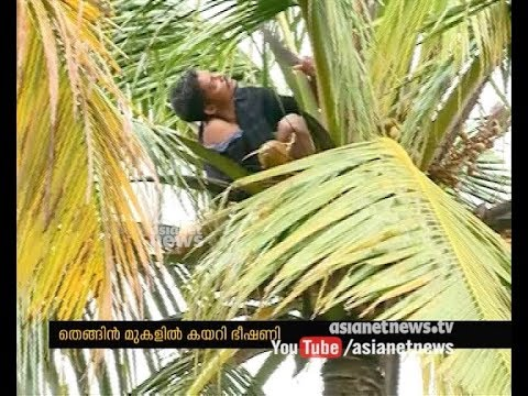 Youth raises suicide threat by climbing coconut tree at Kollam
