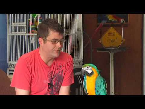 How to Train a Parrot