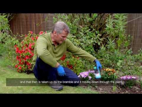 How to treat brambles in your flowerbed with Roundup weedkiller gel | Video