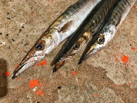 Barracuda Fishing In Greece...