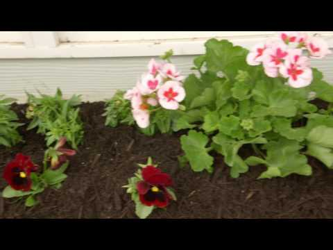 Quick Tip 4 Feeding Bees and Pollinators
