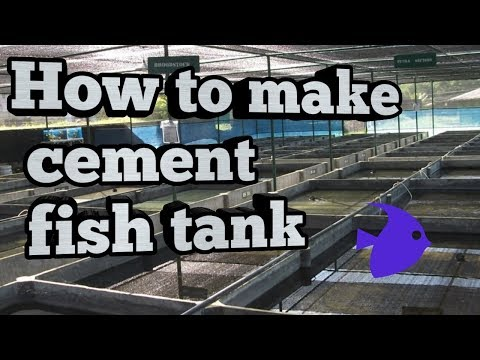 How to Make cement fish tank