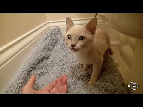 How to Help a Shy Scared Kitten | First Days Home!
