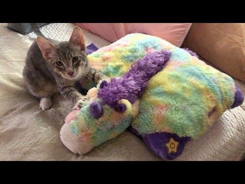My kitten thinks this unicorn is his mom!