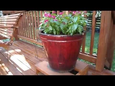 Planting in my 5 large Ceramic planter pots