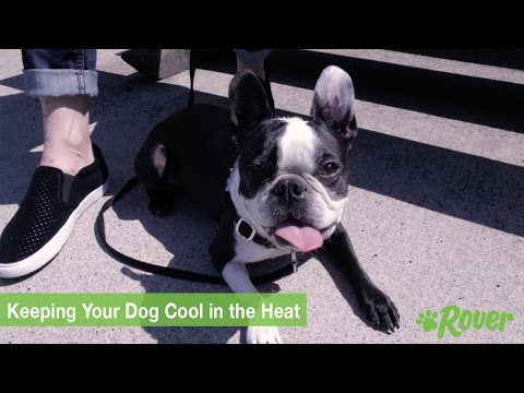 Keeping Your Dog Cool in the Heat - Rover.com Quick Tips
