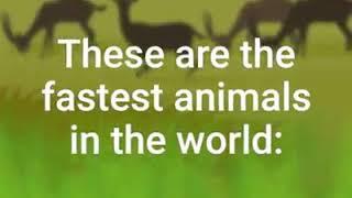 Fastest Animals on earth.