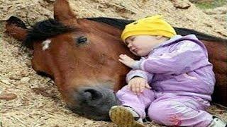 El momento más divertido entre bebés y caballo #2 🐴 Gracioso Bebé y Mascota