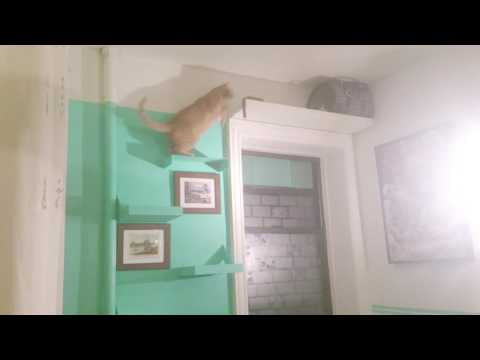 SUBWAY TABBY'S   cat wall steps shelves