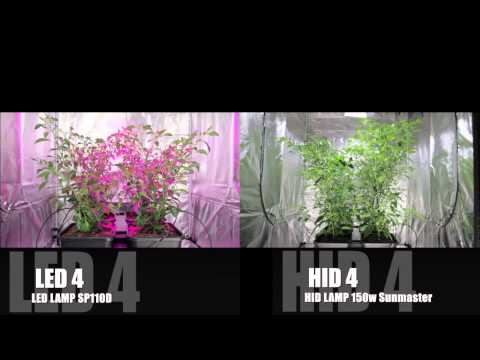 LED vs HID Grow Lights | The Final Chilli Battle