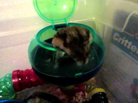 Hamster Update: New Hamster Bedding!