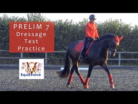 Prelim 7 Dressage Test Learning Tool