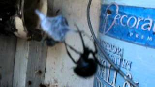Download out house black widow Video