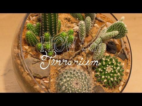 Make a Cactus Terrarium - How To Terrarium ep. 4