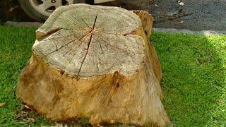 Como secar un árbol....Como sacarlo...Como desaserme de un árbol.Parte 1