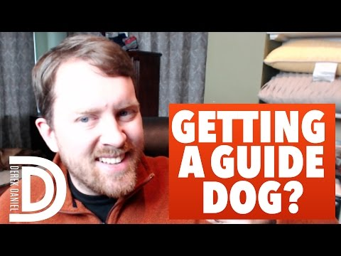 5 Things To Consider BEFORE Getting A Guide Dog | Derek Daniel