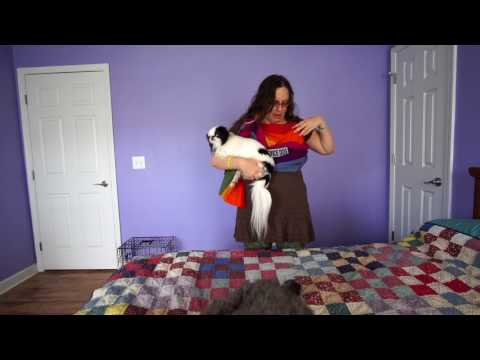 Using a Maya Wrap lightly padded sling with a service dog