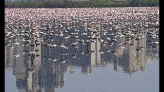 Flamingos enjoy quieter roads and cleaner air in Mumbai