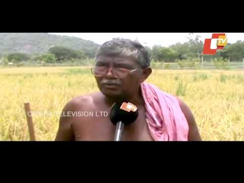 Xxx Mp4 Jharkand Elephants Unleash Terror In Odisha 39 S Nilagiri 3gp Sex