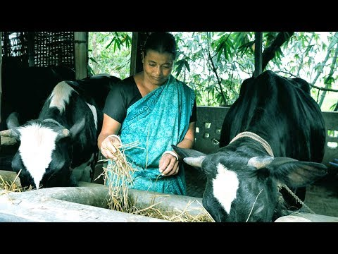 Starting a Business - Cow Farm for Meat and Cattle Farming Business Plan