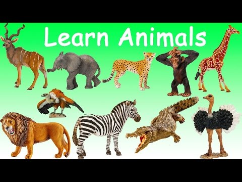 Learn Wild Animals Names Sounds Singular Plural Fun Educational for Kids Toddlers Babies