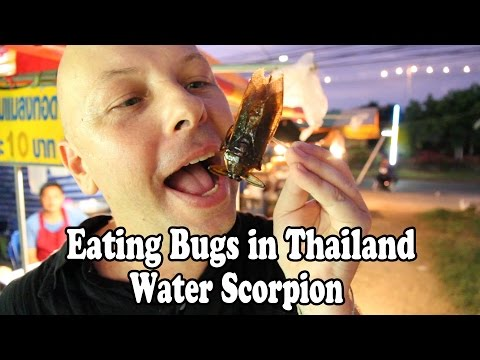 Eating Bugs and Insects in Thailand: Giant Water Scorpion. Bizarre Thai foods!